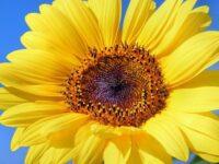 画像圧縮を一括処理! WordPressプラグイン「EWWW Image Optimizer」