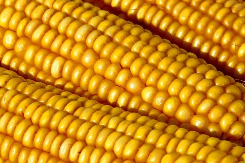 corn-in-10-seconds-0001